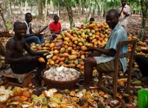 Cocoa_farmers