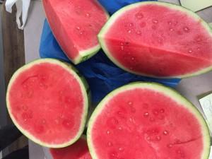 italienske vandmeloner - vejede 7 kg hver