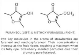 strwaberry furaneol